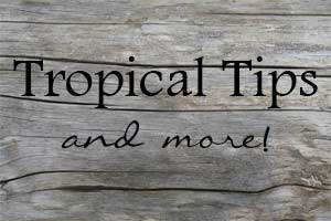 Wood-with-Tropical-Tips-and-more---O