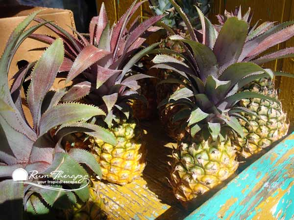Black Pineapple on Antigua