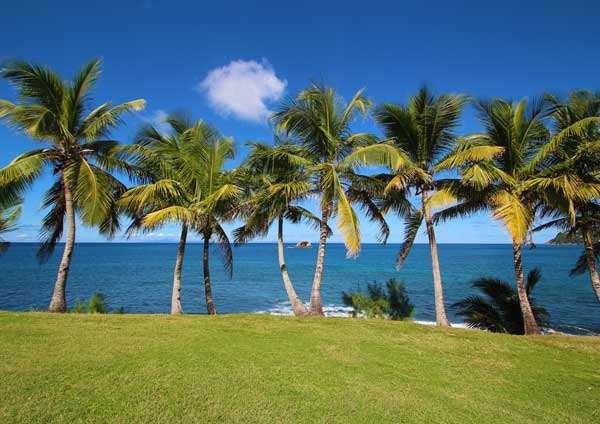 Explore The Beauty Of Caribbean: Rum Therapy Blog
